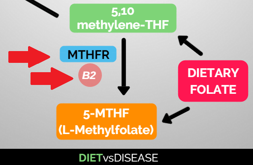 mthfr-enzyme-and-vitamin-b2-for-methylation