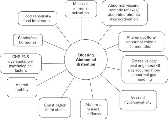 proposed-causes-of-stomach-bloating