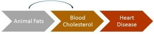 dietary cholesterol to blood cholesterol