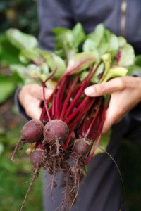 Beetroot nitric oxide helps blood pressure