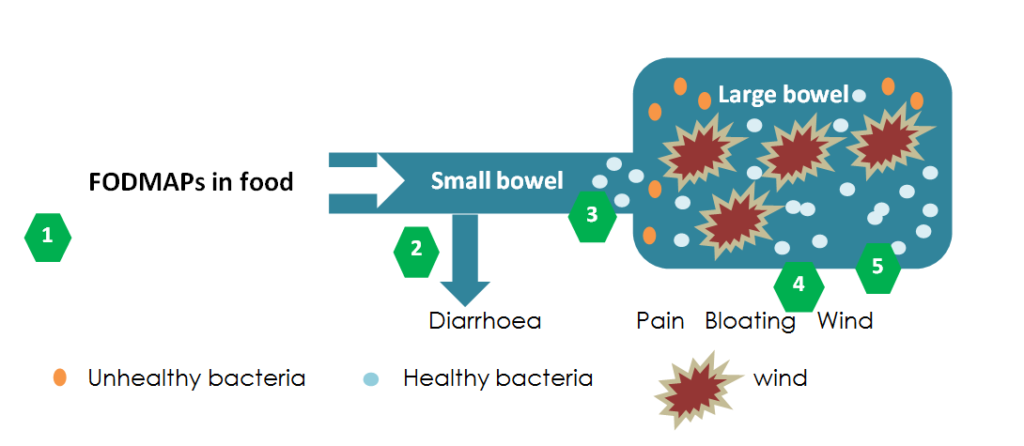 FODMAPS in the bowel