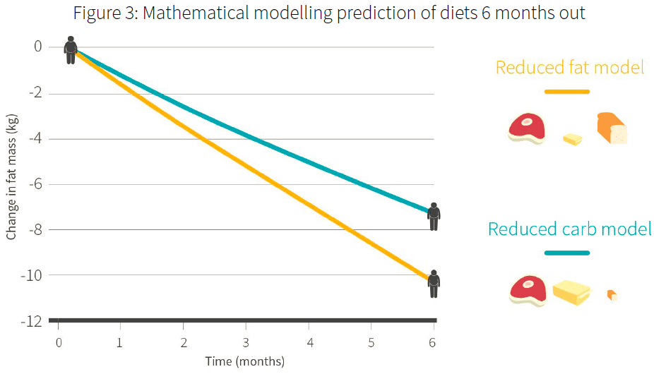 model prediction of low carb vs low fat diet