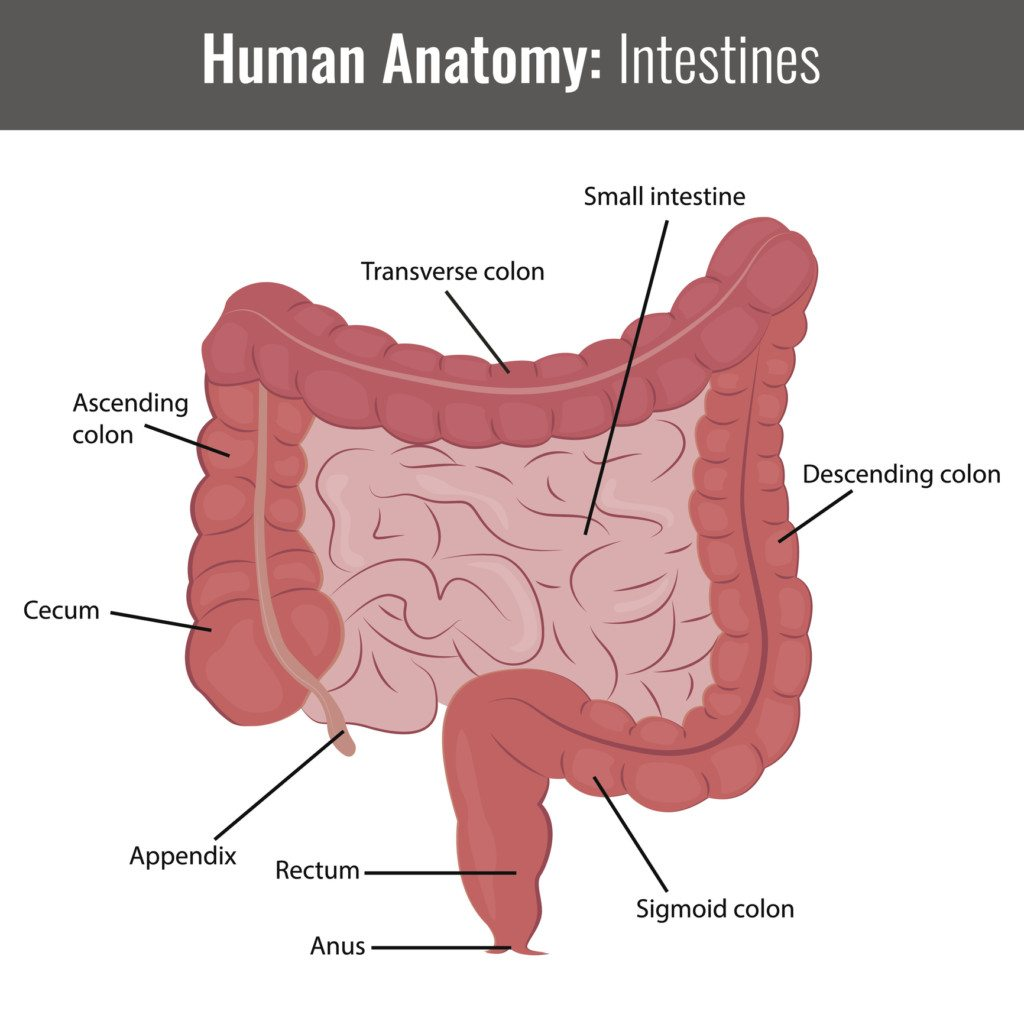 small intestine and large intestine SIBO