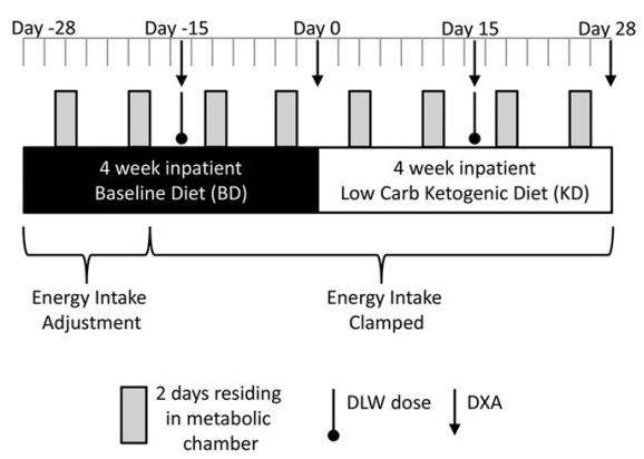 baseline vs 4 weeks kevin hall low carb study