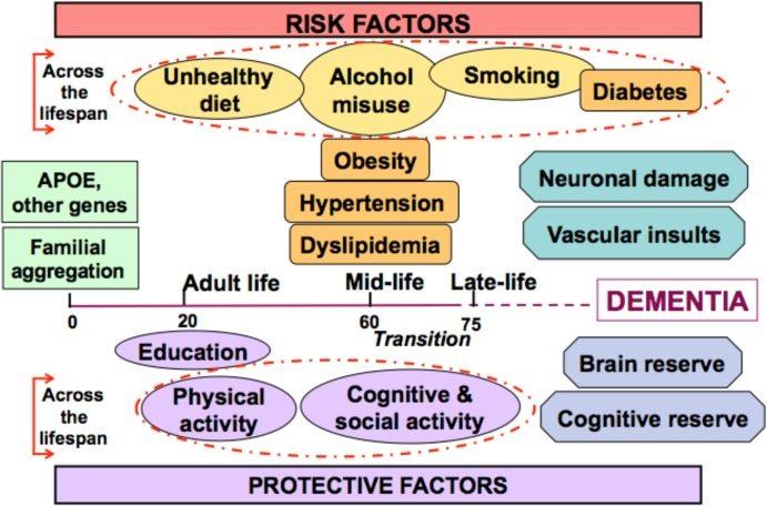Risk factors of alzheimer's disease