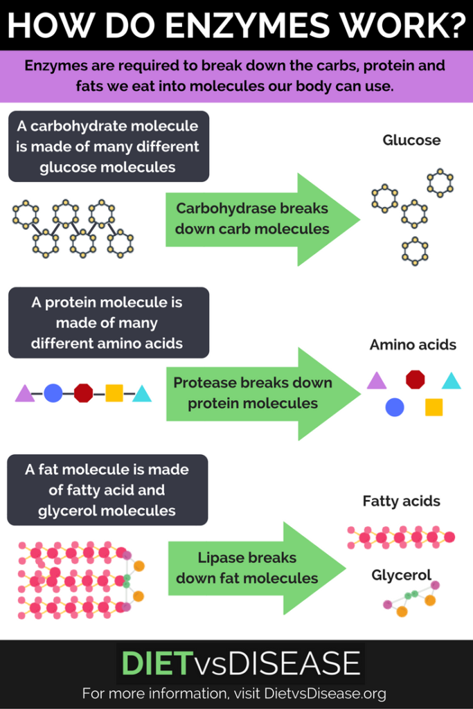 how-do-enzymes-work