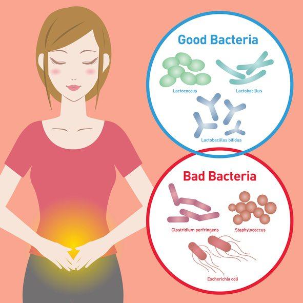Probiotics May Help