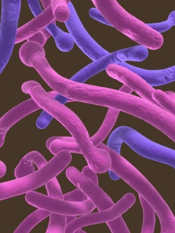 What is Candida