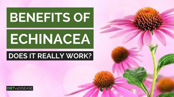 Benefits of Echinace Does It Really Work