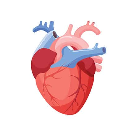 L-Arginine for Blood Pressure and Heart Disease