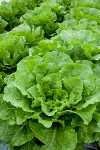 Eat More Green Leafy Vegetables and Fortified Grain and Cereal Foods For Folate