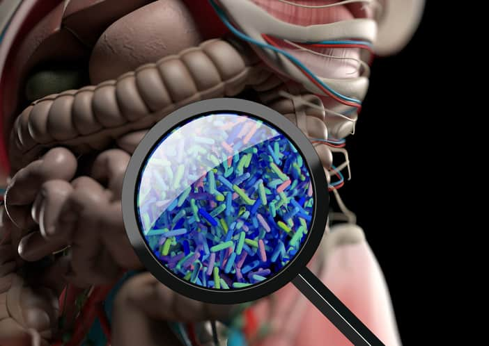 Gut bacteria, microbiome. Bacteria magnified through magnifying glass, concept, representation. 3D illustration.