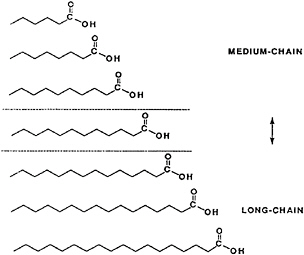 A comparison of the structure of short-chain, medium-chain, and long-chain triglycerides.