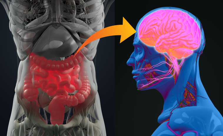 What is the Gut-Brain Axis?
