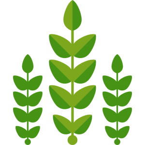 5. Rhodiola Rosea