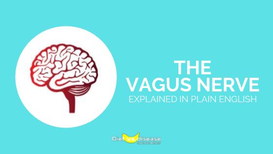 The Vagus Nerve Explained in Plain English